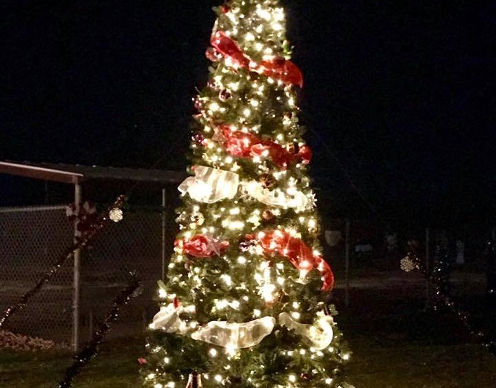Friends of the Park Christmas in the Park 2018 1